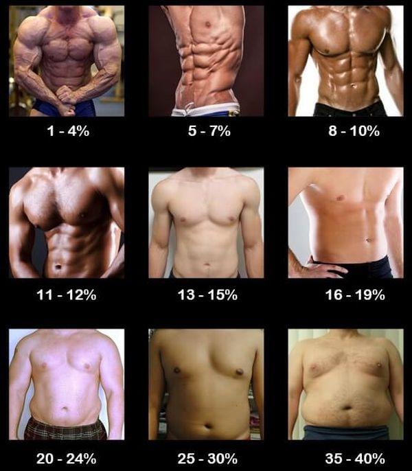 body fat percentages men